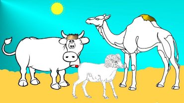 Kau, dashi dhe deveja